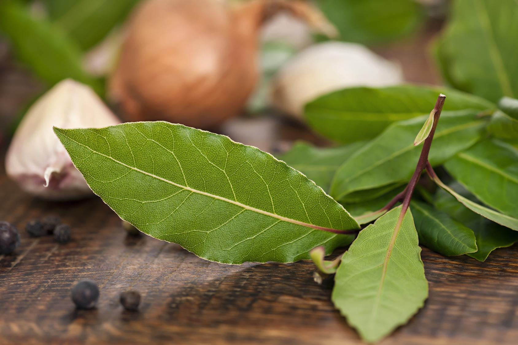 Lorbeer Blätter