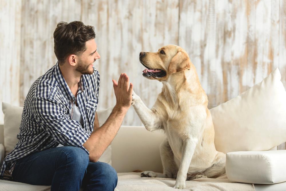 Das Beste für die Haustiere